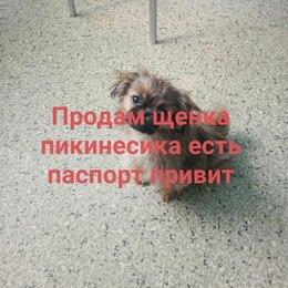 Собаки - Пекинесс, 0