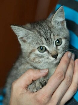 Кошки - Кроха Тучка, котенок, найденный в лесу, 0