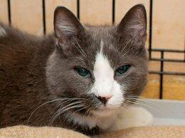 Кошки - Кот Киаби, потерявший хозяйку, 0