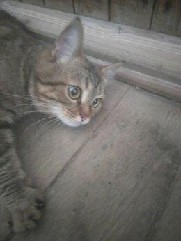 Кошки - Кот, 0