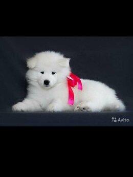 Собаки - Самоедская собака, 0