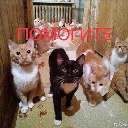 Кошки - Коты и Кошки ищут дом, 0