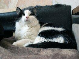 Кошки - Кот Честер , 0