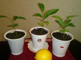 Комнатные растения - разные по 50р, 0