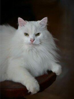 Кошки - Котик Шурик ищет семью., 0
