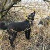 Фрида ищет хозяев по цене даром - Собаки, фото 6