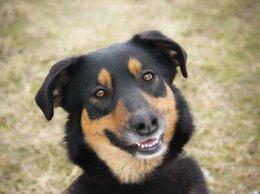 Собаки - Необыкновенная ласковая собака ищет семью , 0