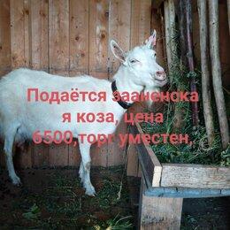 Сельскохозяйственные животные и птицы - Коза, 0