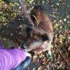 Мелкаш. Небольшая и добрая собачка ищет дом!!! по цене 5₽ - Собаки, фото 17