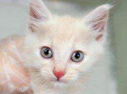 Кошки - Невероятно красивый котенок Курсор, 0