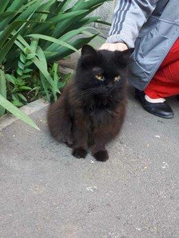 Кошки - Черная пушистая кошечка, 0