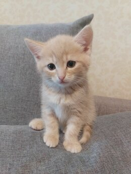 Кошки - Космо- котята ^^, 0