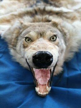 Рога, шкуры, чучела животных - Ковёр из шкуры волка, 0