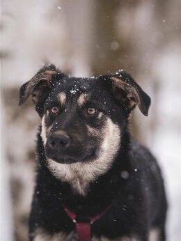Собаки - Добрый парень Роберт в добрые руки, 0