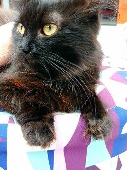 Кошки - Кошечка Милашка, стерилизована, 0