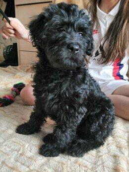 Собаки - Щенок (девочка, 2 месяца) в дар, 0