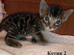 Кошки - Бенгальчики яркого окраса для души и разведения, 0