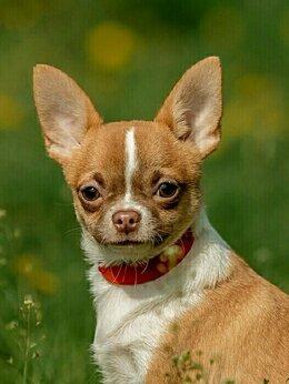 Собаки - Квинтэссенция любви, 0