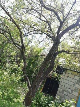 Бытовые услуги - спил деревьев , 0