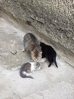 Кошки - Отдам бесплатно котят в добрые руки , 0