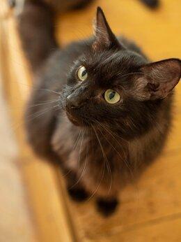 Кошки - Кот Волчек ищет дом , 0