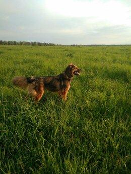 Собаки - Кобель, собака, 0