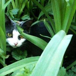 Кошки - Котёнок ЛисаАлиса, 0