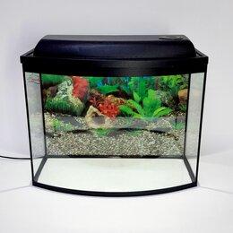 Аквариумы, террариумы, тумбы - Аквариум 55 литров с гнутым стеклом, 0