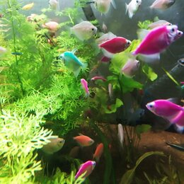 Аквариумные рыбки - Рыбки аквариумные, 0