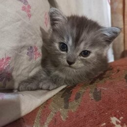 Кошки - Зита и Гита в добрые руки, 0