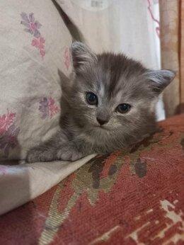 Кошки - 1.5мес.котята-девочки бесплатно, 0