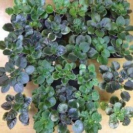 Комнатные растения - Фиалки - набор молодых розеток, 0