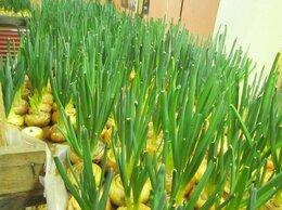 Сельское хозяйство - Ищу инвестора для открытия теплиц по выращиванию…, 0