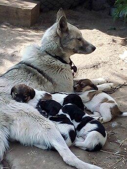 Собаки - Отдам щенков , 0