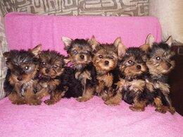 Собаки - Детки конфетки , 0