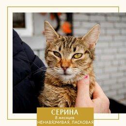 Кошки - СЕРИНА, 0