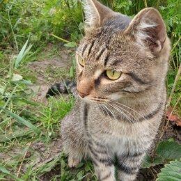 Кошки - отдам в заботливые руки, 0