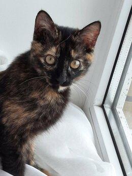 Животные - Кошечка ищет дом, 0