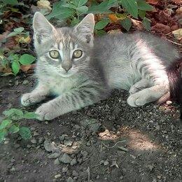 Кошки - Животное котята, 0