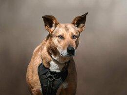 Собаки - Нага, три года в приюте без надежды..., 0