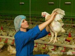 Рабочий - Рабочий на отлов кур, вахта на птицефабрику с…, 0