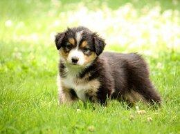 Собаки - щенок черно-белый, 0