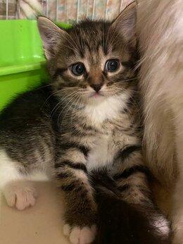 Кошки - Пусть мама услышит, пусть мама придет...Котята в…, 0