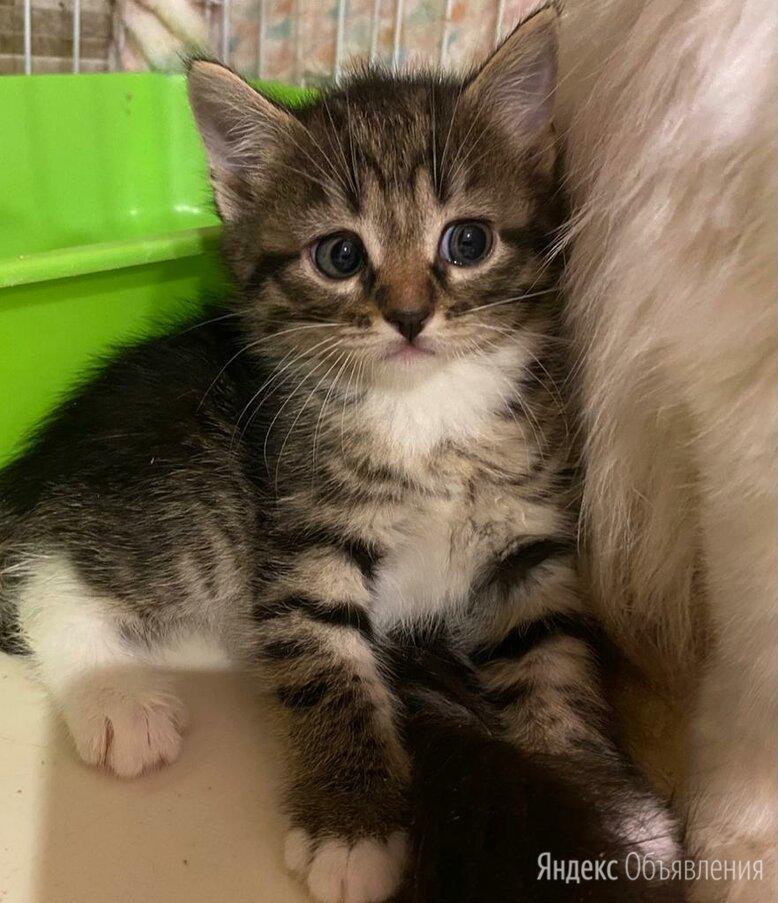 Пусть мама услышит, пусть мама придет...Котята в добрые руки. по цене даром - Кошки, фото 0