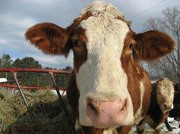 Удобрения - Коровий навоз. Коровий перегной., 0