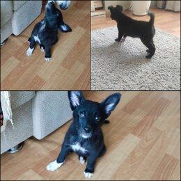 Собаки - Собака-звоночек, бесплатно, 3 месяца, 0
