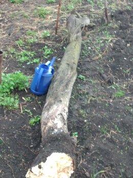 Дрова - Сухой ствол де́рева яблони на дрова, 0