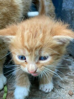 Кошки - Котята в добрые руки, котенок, 0