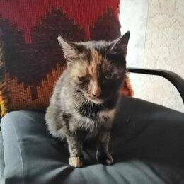 Животные - Серая черепаховая кошка найдена , 0