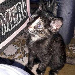 Кошки - Маленькие пушистики, 0
